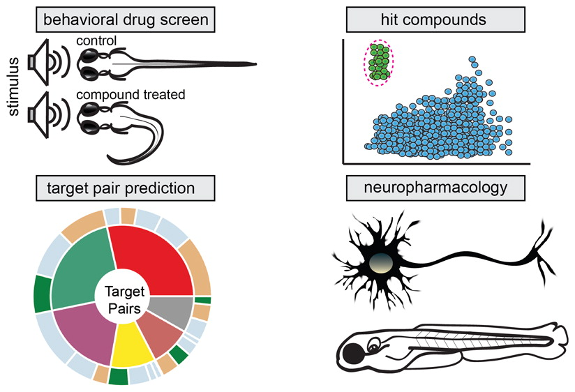 Leveraging Large-scale Behavioral Profiling in Zebrafish to Explore Neuroactive Polypharmacology